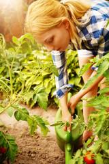 Tomaten Frau Garten