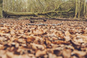 Winter forest floor