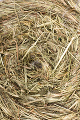 hay nest texture for background