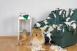 Hund zerstört Ledersessel - 79855804