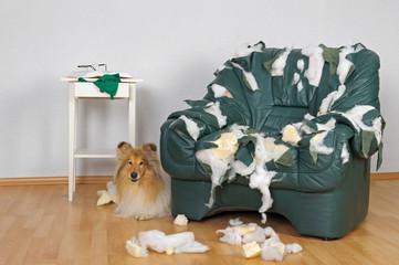Aggression gegen Möbel, nicht artgerechter Hundehaltung