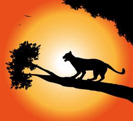 silhouette di pantera al tramonto