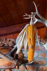 Corn left hanging to dry