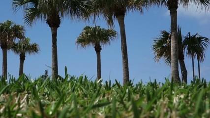 椰子の木と芝生
