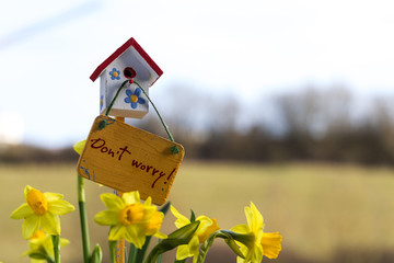 Narcisses and happy birdhouse in spring, Luxembourg