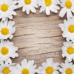 Chamomile flowers border on wooden background