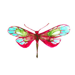 butterfly,watercolor design © aboard