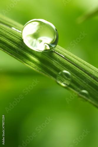 lisc-z-deszcz-kropelkami-akcyjny-wizerunek