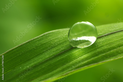 Fototapeta leaf with rain droplets - Stock Image