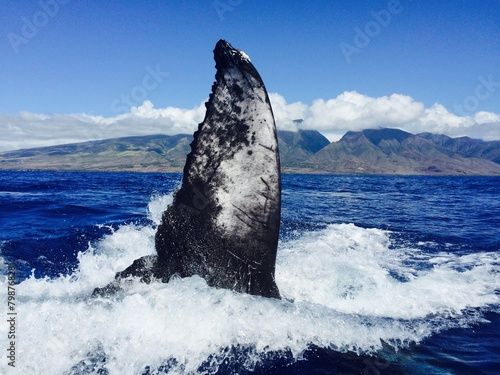Fotobehang Exclusieve humpback whale slaps his tail, maui