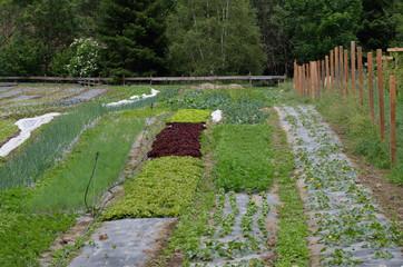 orto piantare coltivare