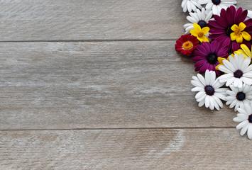Sommerblumen auf Holzhintergrund
