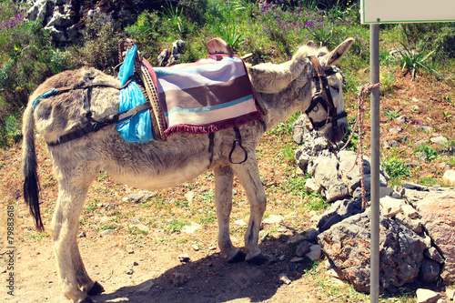 Poster Ezel Donkey worth waiting tied to a post on a hot day