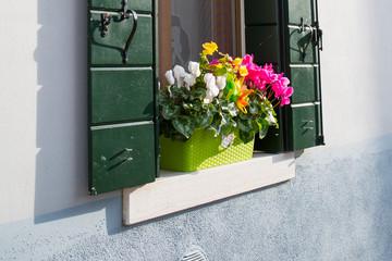idyllic window with flower