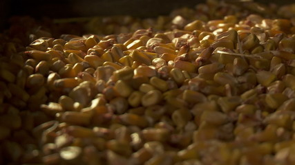 Husking the maize - HD footage 1080P