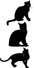 Cat set 2