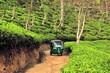 Leinwanddruck Bild - Rikshaw in Tea field plantations, Sri Lanka