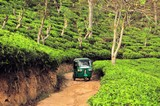 Rikshaw in Tea field plantations, Sri Lanka