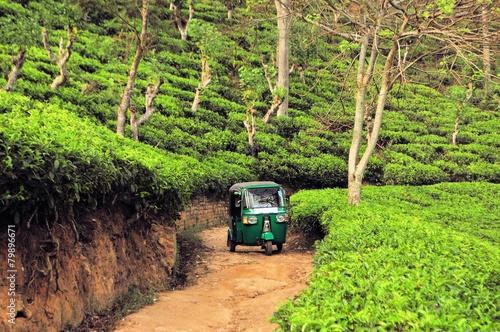 canvas print picture Rikshaw in Tea field plantations, Sri Lanka