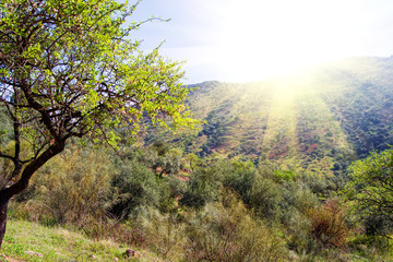Landscape, field, Casabermeja, Málaga