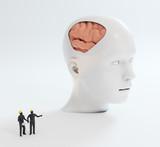 Human intelligence and psychological development