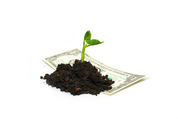 The plant grows from a pile of soil and banknote on a white back
