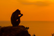 canvas print picture - Baby monkey silhouette at beautiful sunset in mountains