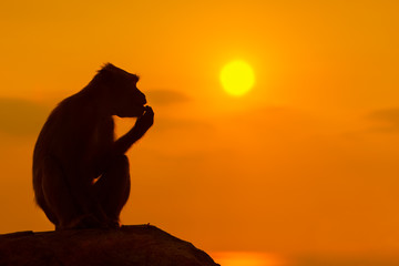 Baby monkey silhouette at beautiful sunset in mountains