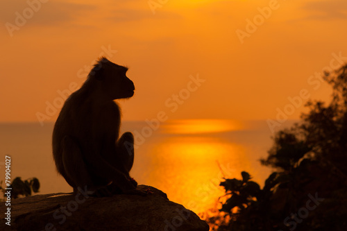 Monkey silhouette at beautiful sunset in mountains