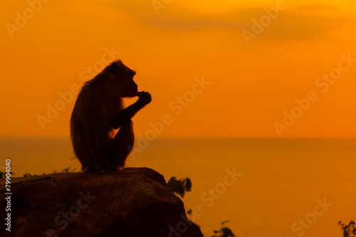 canvas print picture Baby monkey silhouette at beautiful sunset in mountains