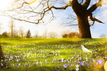 abstract sunny beautiful Spring background