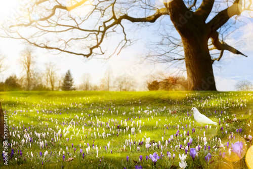 Foto op Plexiglas Landschappen abstract sunny beautiful Spring background