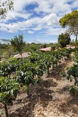 Doka Kaffeeplantage in Costa Rica