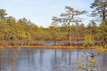 Frozen bog-pools in Viru bog, Lahemaa National Park, Estonia