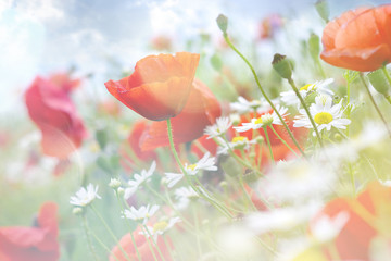 Abstract floral background with poppies. flowers with color filt