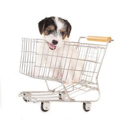 Niedlicher welpe im Einkaufswagen isoliert