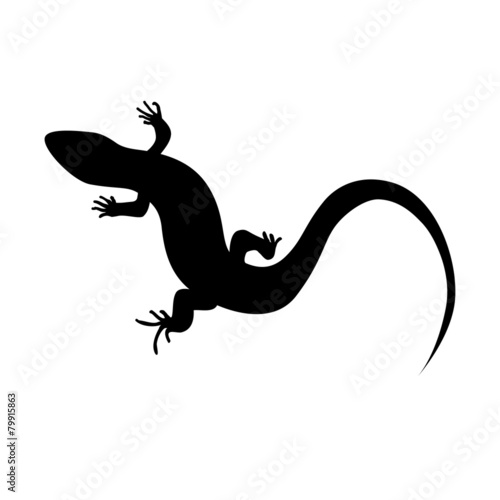 Beautiful  monochrome lizard, lizard silhouette. Vector illustra - 79915863