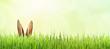 Leinwandbild Motiv Osterhase versteckt im Gras