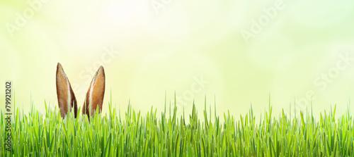 Osterhase verdeckt im Gras