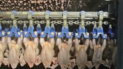 chicken meats are in a cold storage before cutting