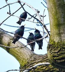 Four uties singing