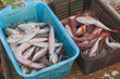 crates of sea fish