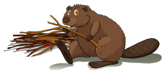 Beaver holding a stick