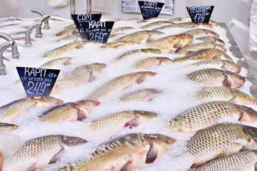 Carp fish lie on ice in supermarket store
