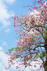 Pink flower blooming