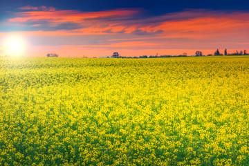 Stunning sunset and canola field,Transylvania,Romania,Europe