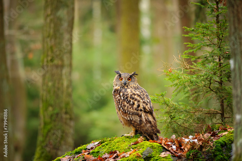 Foto op Plexiglas Eagle Eurasian eagle-owl in forrest