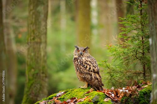 Foto op Canvas Uil Eurasian eagle-owl in forrest