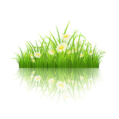 Green grass and daisies with reflection on white