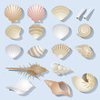Sea Shell Objects Set - 79944079